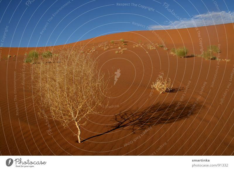 Wüstenbeauty Sand Sträucher Wüste dünn Vertrauen heiß trocken Stranddüne Afrika Namibia Kämpfer Namib Sossusvlei Wüstenpflanze