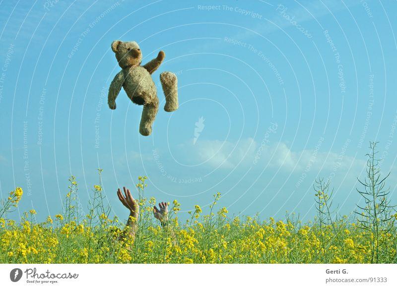 teddy-tossing Himmel blau Hand Freude Wolken gelb Landschaft Spielen Glück springen lustig braun fliegen Arme hoch Humor