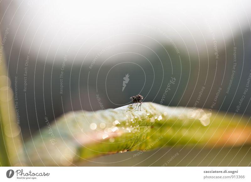 Die Fliege Natur Pflanze grün weiß Tier Umwelt Herbst Gras lustig natürlich grau klein Freiheit Wildtier sitzen