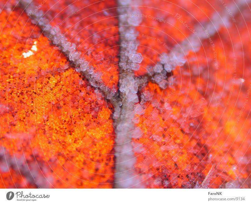 Laub rot Blatt Herbst