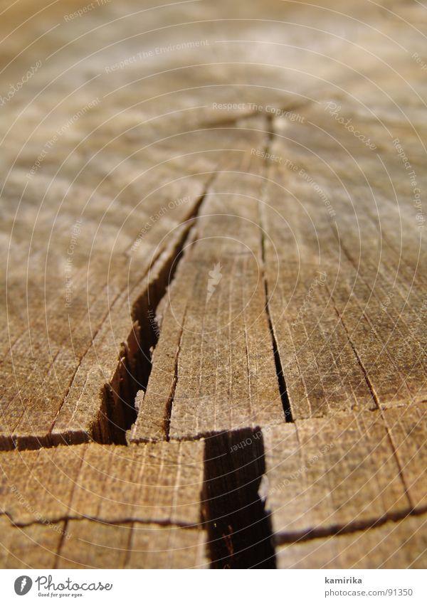 erdspalte Baum Pflanze Sommer Leben Holz Erde Wachstum Spalte Haarschnitt Maserung Eiche Säge Erdspalte Erdbeben Kettensäge