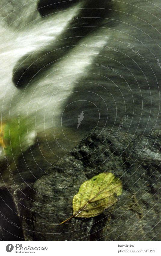 lauf der zeit alt Wasser Zeit Stein laufen genießen Fluss Flüssigkeit Erfrischung Bach silber fließen Wasserfall Farbfleck Buche beruhigend