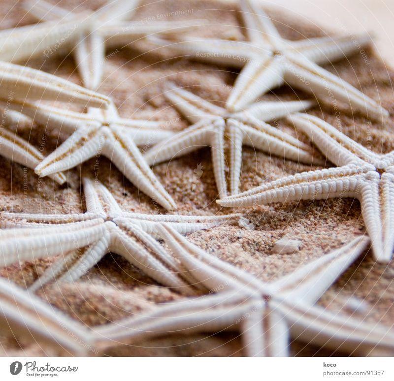 starfish Meer Strand Tier Stein Sand Küste Fisch Stern (Symbol) finden Seestern