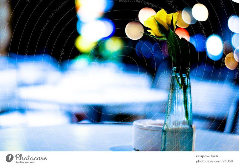 Blume der Nacht Farbe kalt Lampe Stimmung Gastronomie