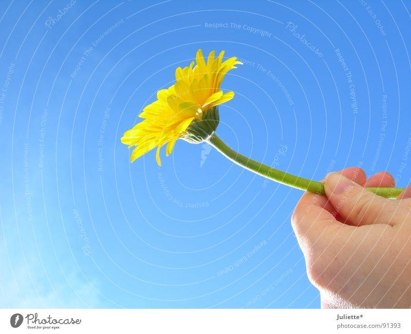 für dich Hand Himmel Blume blau gelb Geburtstag Geschenk geben Glückwünsche Jubiläum Wunsch