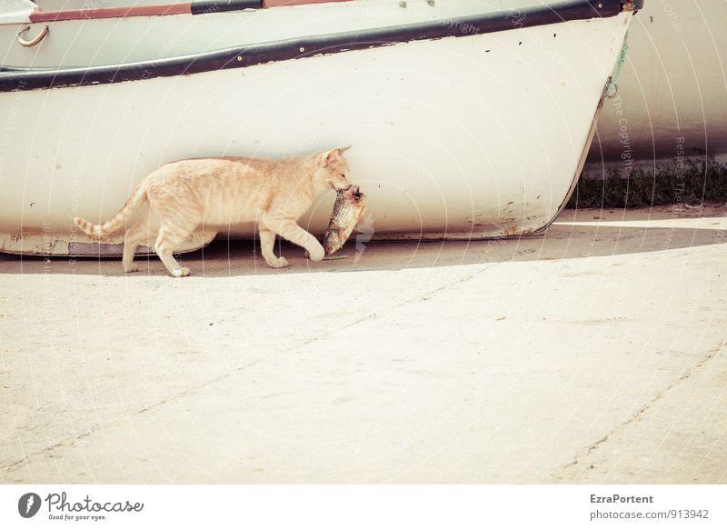 Katze mit Umwelt Natur Stadt Wege & Pfade Tier Haustier Fisch Fell Pfote 2 fangen tragen gelb weiß Wasserfahrzeug Gebiss Fischkopf Tod gefangen Fressen Jäger
