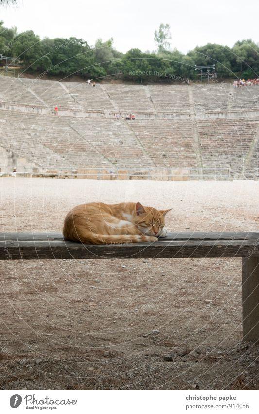 Tierisch gelassen vom ganzen Theater Katze Erholung Tier Architektur niedlich schlafen historisch Bauwerk Wahrzeichen Haustier Sehenswürdigkeit Griechenland Mittagsschlaf Epidaurus