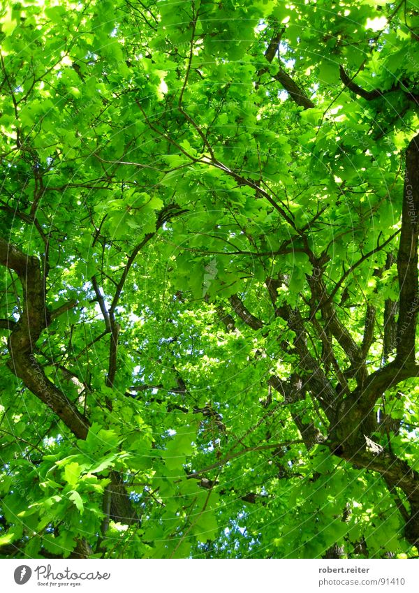 grüner himmel Baum Sommer Blatt Farbe Wald Leben Glück Frühling Park groß Wachstum Ast Blühend Baumstamm Wohlgefühl