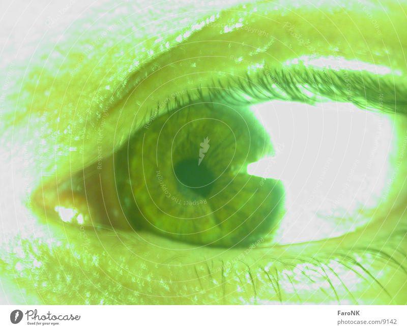 Auge grün Wimpern Regenbogenhaut