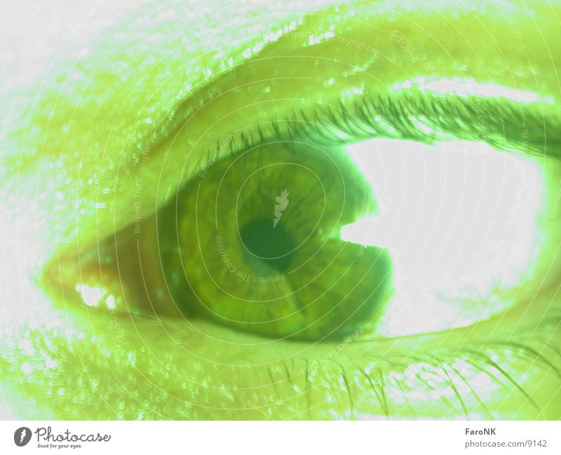 Auge Wimpern grün Makroaufnahme Nahaufnahme Regenbogenhaut