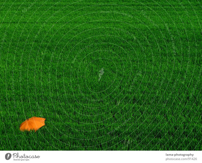 Einsamkeit Cloppenburg Regenschirm Sonnenschirm Unwetter Wolken Gras Halm Wiese Sommer Feld grün Frühling ruhig Erholung Sonnenbad vergessen Blumenwiese Umwelt