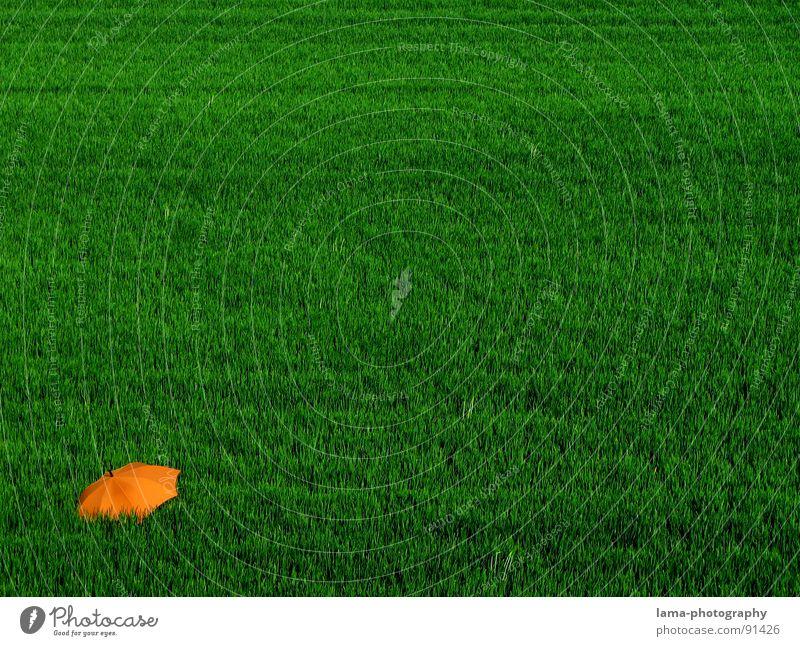 Einsamkeit Natur Blume grün Pflanze Sommer ruhig Wolken Einsamkeit Ferne Farbe Erholung Wiese Gras Frühling Garten See