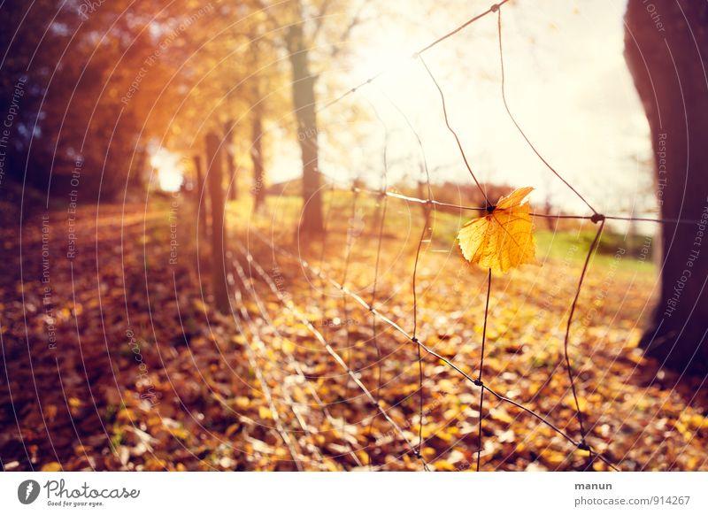 Lichtblick Natur Sonne Blatt ruhig Wald Wärme Herbst Wege & Pfade Tod natürlich Park Idylle Schönes Wetter Warmherzigkeit Vergänglichkeit Wandel & Veränderung