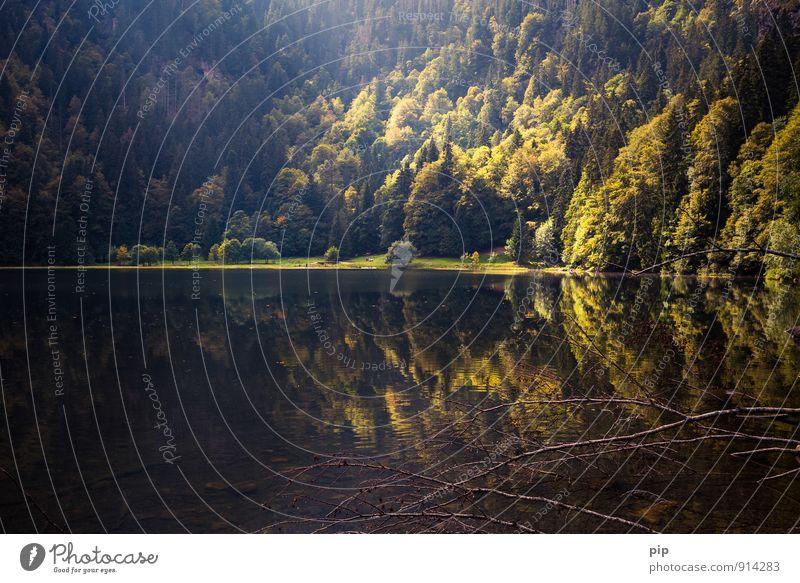 feldsee Natur Ferien & Urlaub & Reisen Sommer Landschaft ruhig dunkel Wald Berge u. Gebirge außergewöhnlich See Wetter wandern Schönes Wetter Seeufer herbstlich