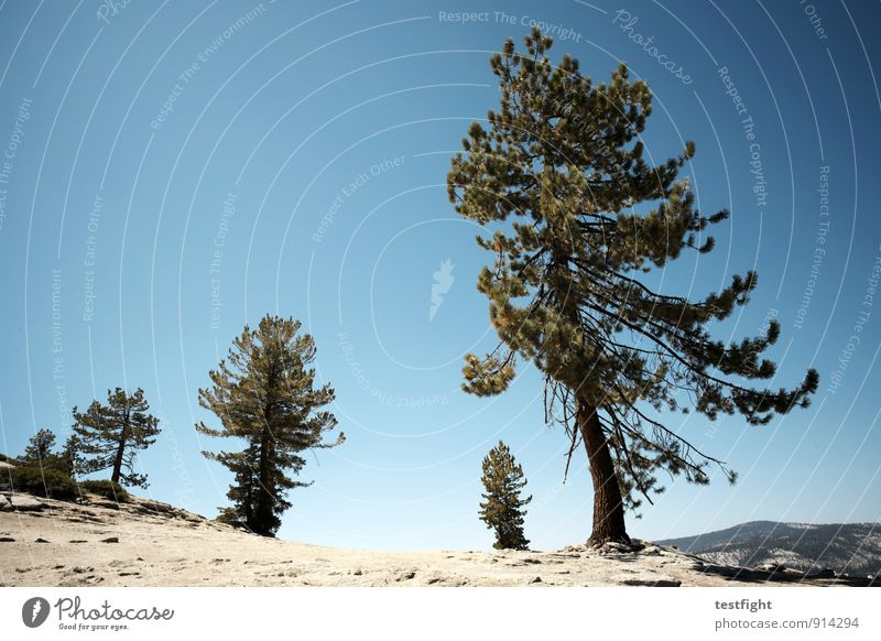 aufstieg Umwelt Natur Landschaft Sand Wolkenloser Himmel Sonne Hügel Berge u. Gebirge Gipfel gehen wandern Freiheit Freizeit & Hobby Tourismus Umweltschutz Baum