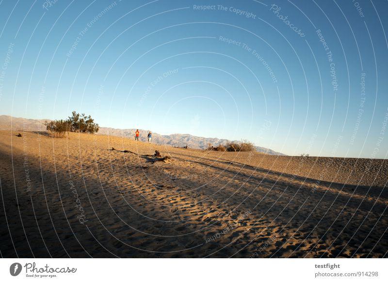 sand Umwelt Natur Landschaft Pflanze Wolkenloser Himmel Wüste Death Valley National Park Umweltschutz Staub Düne Wüstenpflanze Wärme heiß Farbfoto Morgen