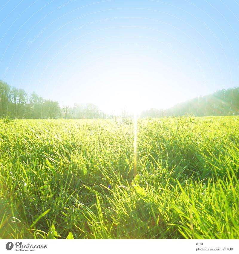 Wiese–3fachbelichtet Sonne grün blau Sommer Einsamkeit Frühling Rasen Quadrat Lichtstrahl
