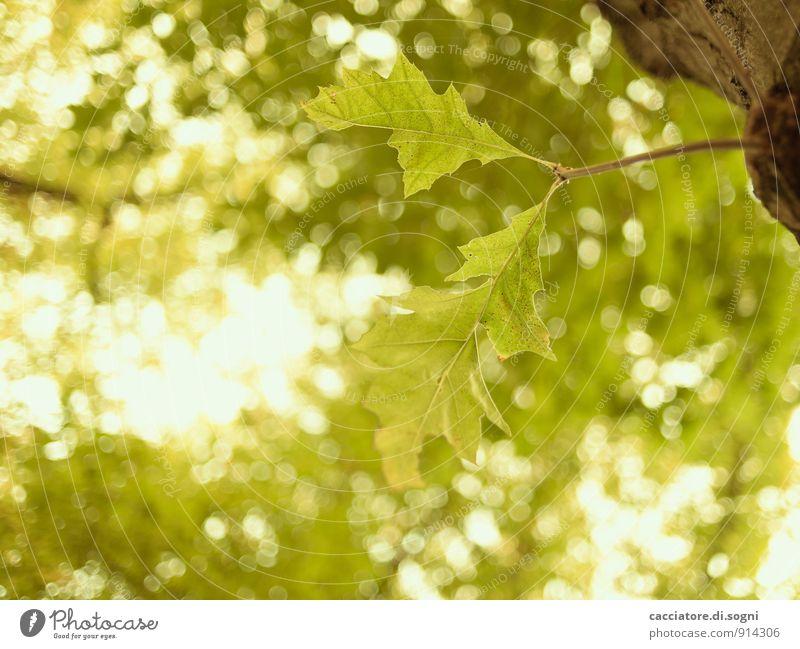 Zwei unter Vielen Natur Pflanze Sommer Schönes Wetter Baum Blatt Wald glänzend einfach frei Freundlichkeit hell natürlich oben positiv gelb grün Lebensfreude