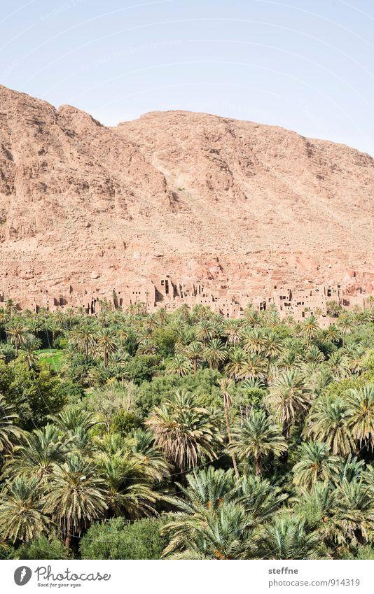 Oasis Natur Landschaft Sand Wolkenloser Himmel Schönes Wetter Baum Marokko Tourismus Ferien & Urlaub & Reisen Palme Oase Wüste Berge u. Gebirge kasbah Wärme