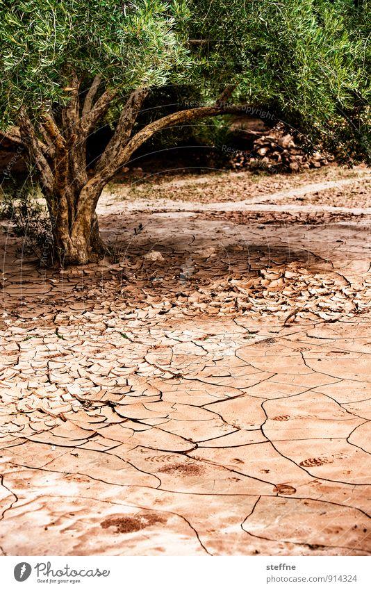 Durst Sommer Wärme Dürre Baum Marokko heiß trocken Arabien Afrika wassermangel Wasser Wüste durstig Farbfoto Außenaufnahme Menschenleer Textfreiraum unten