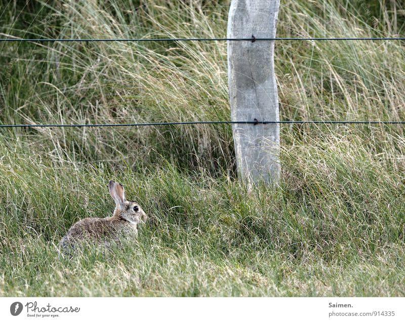 die fabel vom hasen und dem pfosten Natur Pflanze Tier Umwelt Gras Zusammensein Wildtier sitzen Kommunizieren Zaun Fressen Hase & Kaninchen Grünfläche Zaunpfahl