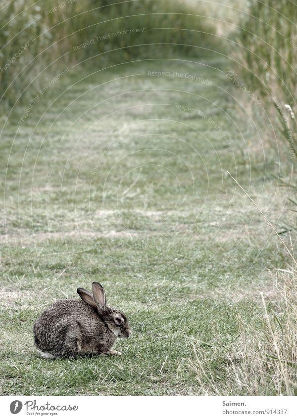 eingemümmelter mümmelmann Umwelt Natur Wiese Feld Tier Wildtier 1 sitzen Hase & Kaninchen grün Ohr gemütlich ungemütlich einzeln Einsamkeit Traurigkeit Farbfoto