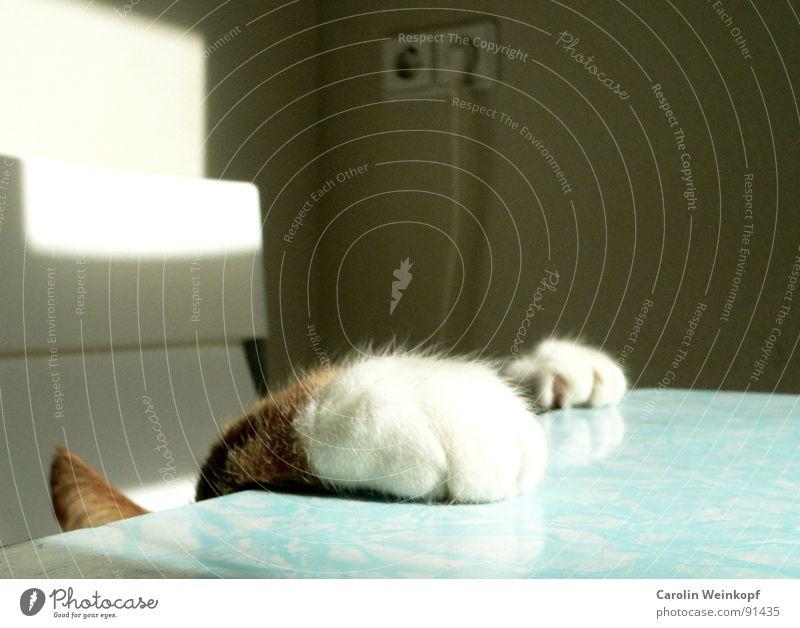 Der Sonne entgegen. Katze Tisch Neugier Pfote rot weiß beige Licht Spielen Spieltrieb Fell weich niedlich Wunsch anstrengen Ausdauer Tischplatte Krallen