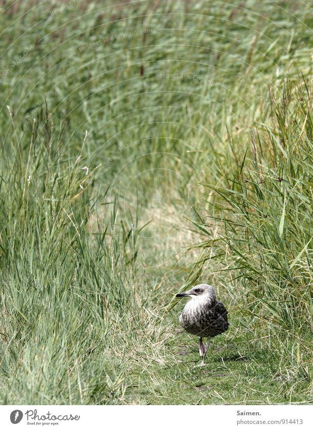 Schulterblick Umwelt Natur Landschaft Pflanze Tier Gras Wiese Wildtier Vogel Tiergesicht 1 Bewegung laufen Schnabel Wege & Pfade grün Blick Farbfoto