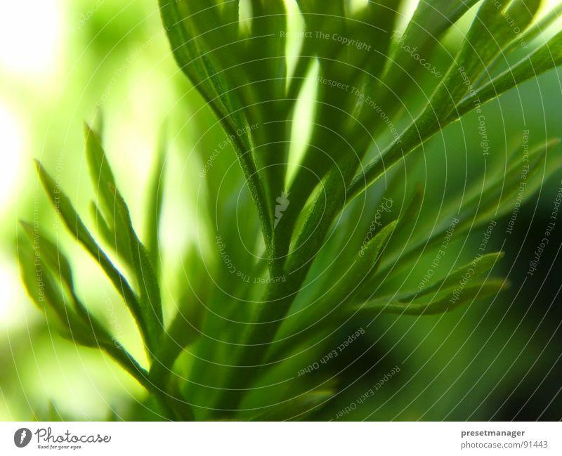 green moment Natur Sonne grün Pflanze ästhetisch Stengel tief Himmelskörper & Weltall