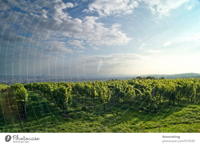 Weinbaugebiet vor Wien Himmel Natur blau Pflanze grün Sonne Landschaft Wolken Umwelt gelb Herbst Gras Luft Wetter Sträucher stehen