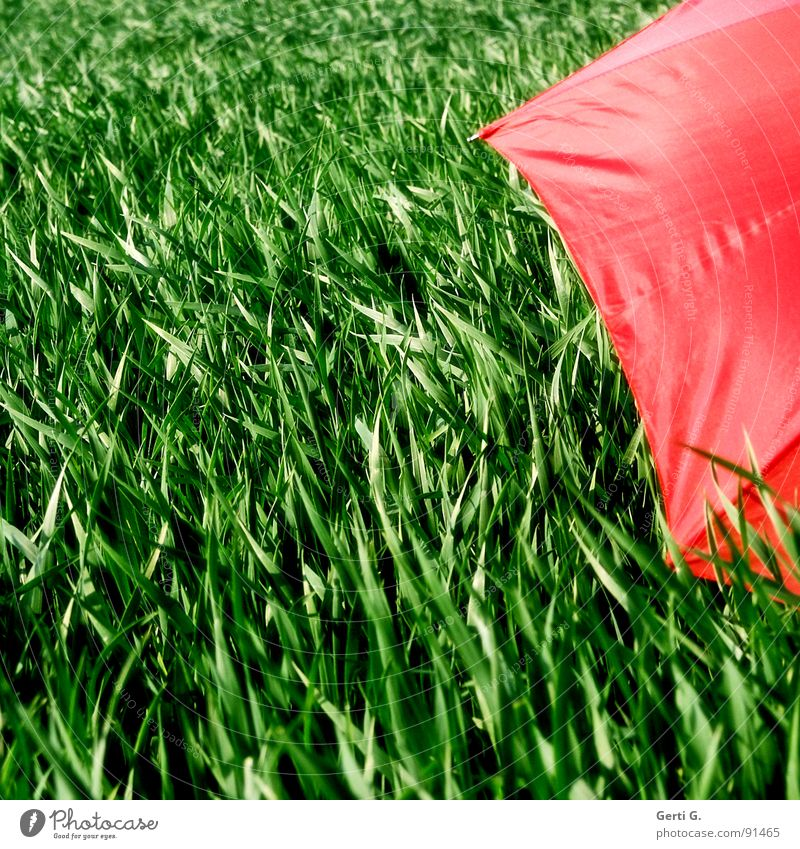 praktisch, quadratisch, abgeschirmt grün rot Sommer Farbe Bewegung Wind Feld Freizeit & Hobby frisch Schutz Landwirtschaft Regenschirm verstecken Korn
