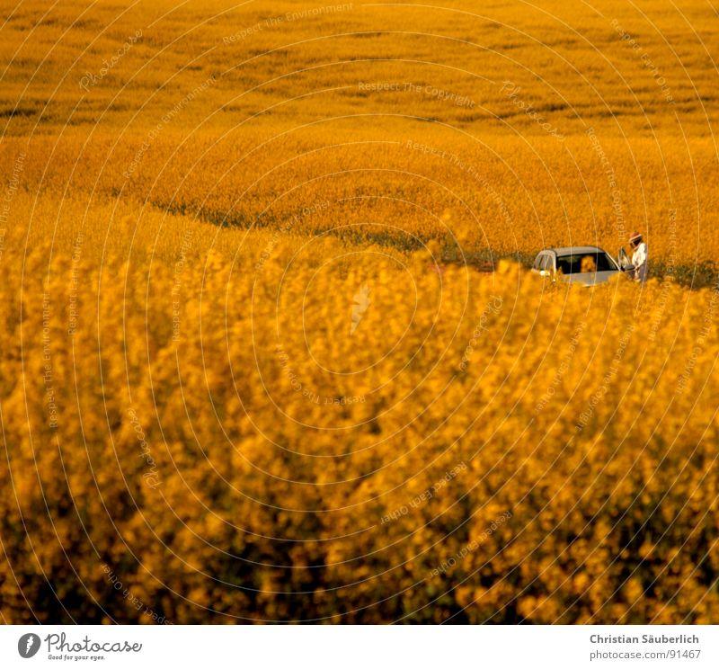 LOST Mann Feld Raps gelb Rapsöl Blüte Einsamkeit Frühling PKW Methode Wüste Pflanze blüen Weide Ferne trist verirrt
