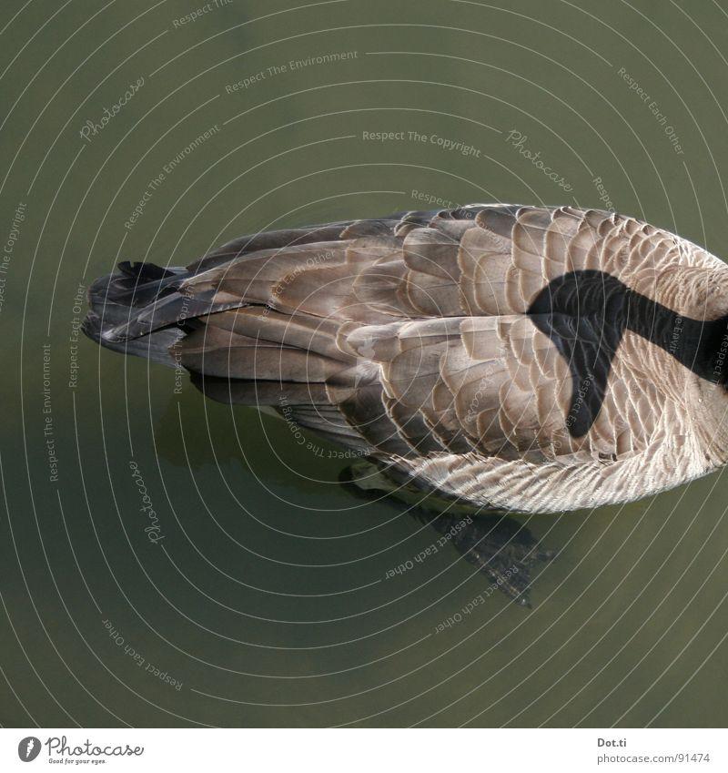if they follow you, don't look back Wasser Tier See lustig Vogel Angst Wildtier verrückt Perspektive Feder beobachten Neugier Hinterteil Im Wasser treiben Jagd skurril