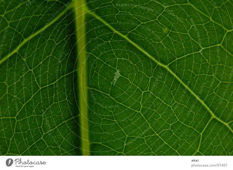 Das Blatt 3 Natur grün Baum Pflanze Blatt Umwelt Leben Garten Park Hintergrundbild Kraft geschlossen Sträucher Ast nah Urwald