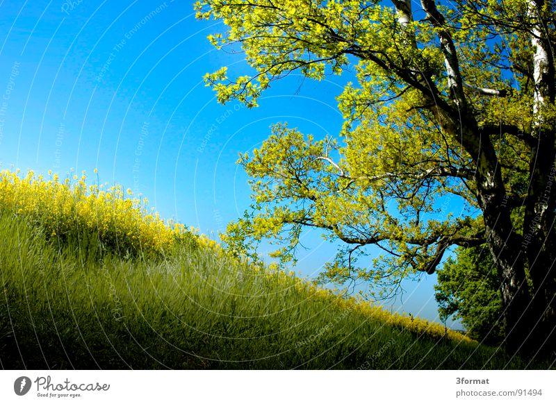 waldesende Himmel Natur blau Ferien & Urlaub & Reisen grün Pflanze Sonne Blume Ferne Landschaft gelb Wiese kalt Frühling Freiheit Blüte