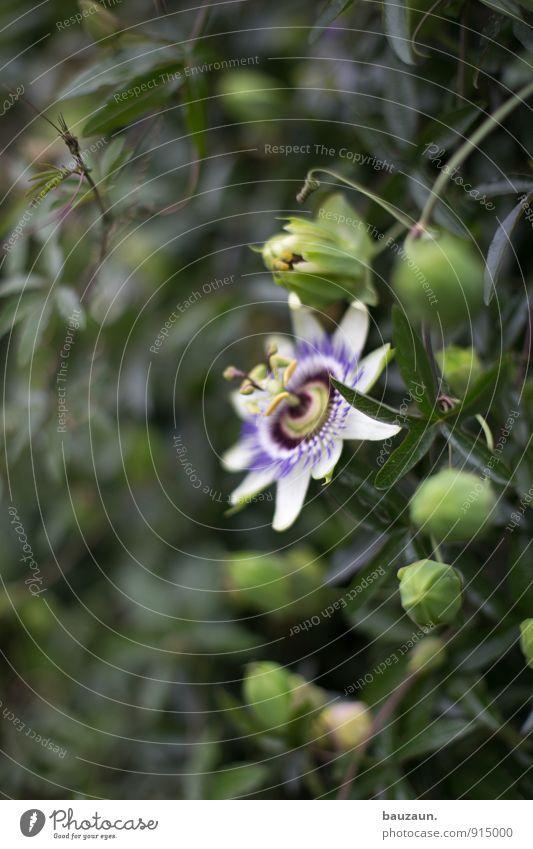 eine blume. Natur Pflanze schön grün Sommer Blume Umwelt Blüte Garten Park Blühend exotisch Gartenarbeit