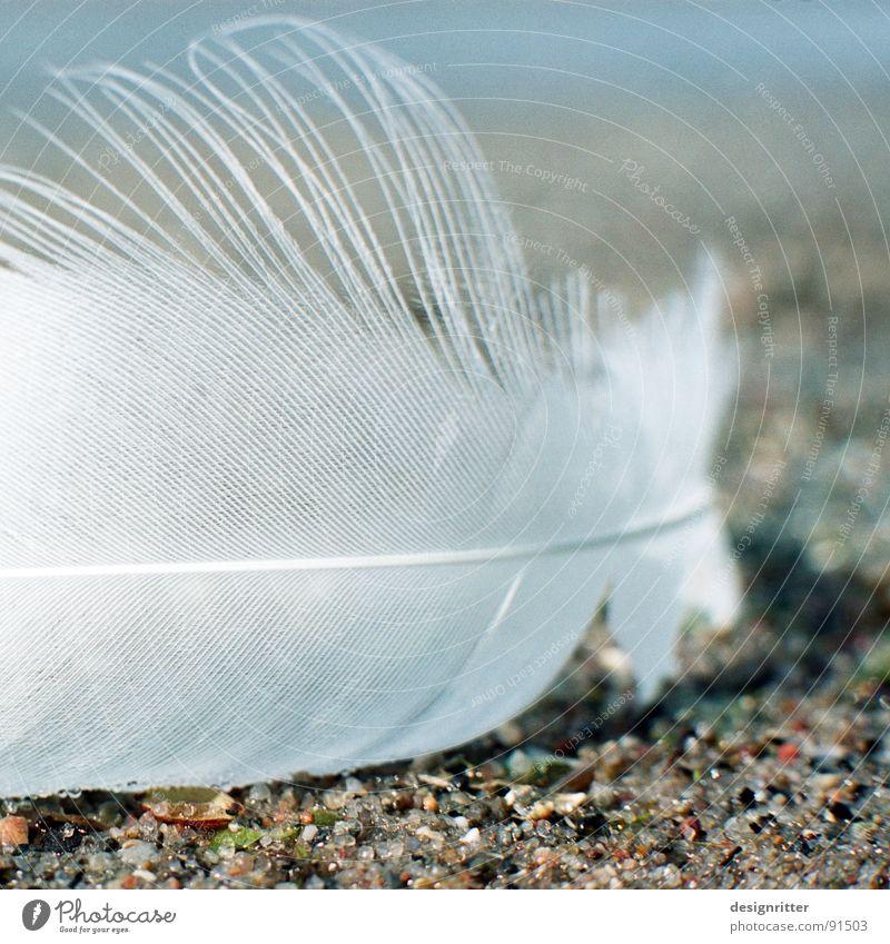 Fluggerät 1 Vogel fliegen Feder Flügel zart leicht zerbrechlich Schwan