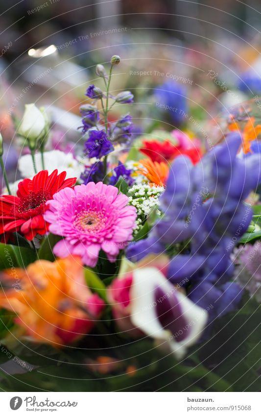mehr blumen. kaufen Stil Freude Glück Wohlgefühl Zufriedenheit Sinnesorgane Duft Feste & Feiern Valentinstag Muttertag Pflanze Blume Blüte Stadt Marktplatz