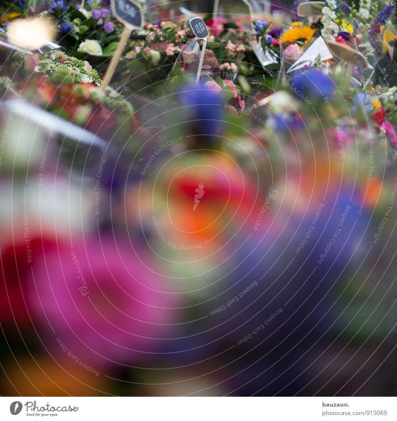 blumenmeer. kaufen Wellness Leben harmonisch Zufriedenheit Sinnesorgane Häusliches Leben Dekoration & Verzierung Feste & Feiern Pflanze Blume Blüte Stadt
