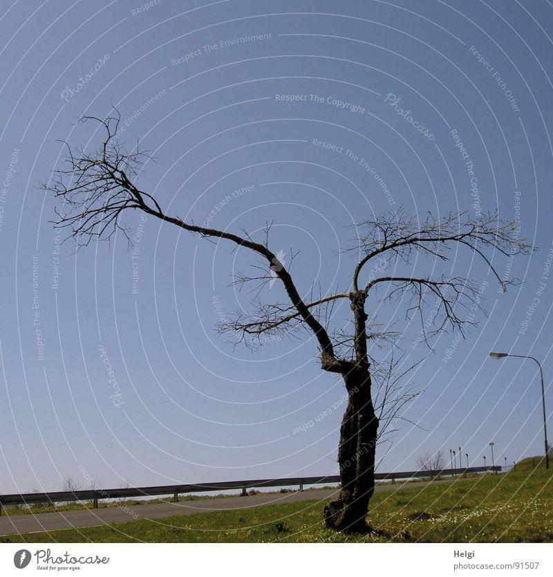 ...bizarr... Himmel blau grün Baum Straße Wiese Berge u. Gebirge Gras Lampe Wachstum stehen Spaziergang Ast Rasen dünn Schönes Wetter
