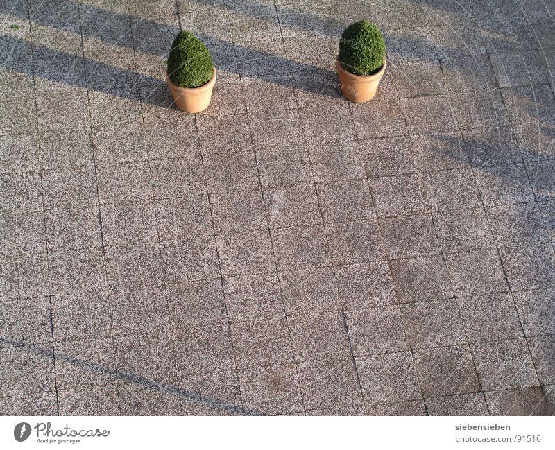 Die Kunst des Landschaftsarchitekten Baum Einsamkeit Garten Traurigkeit Park 2 Beton Trauer trist Balkon Verkehrswege Schwäche Architekt Kunstwerk Kübel karg