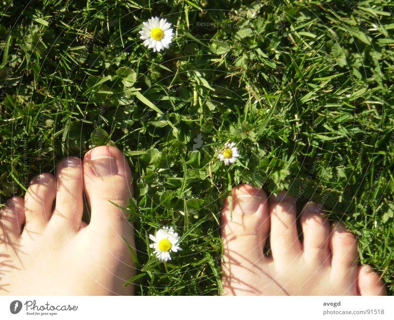 Die dicken Onkel weiß grün Sonne Sommer Blume gelb Gras Frühling Blüte Fuß Haut Bodenbelag Rasen Gänseblümchen Barfuß Zehen