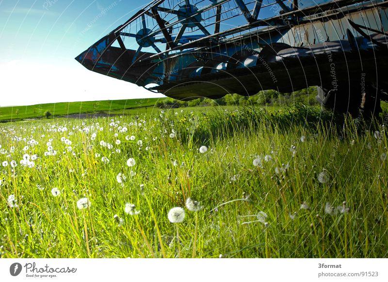 vor_dem_sturm Ähren Mähdrescher Maschine Landleben Feld Weizen Landwirtschaft Dorf Osten Sachsen-Anhalt Arbeit & Erwerbstätigkeit Mehl grün Pflanze Löwenzahn
