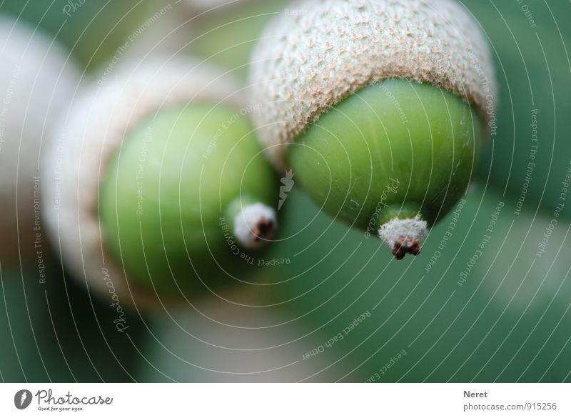 Annäherung Natur Pflanze grün Baum Erotik Herbst ästhetisch Beginn genießen berühren Zeichen Begierde Brunft zögern