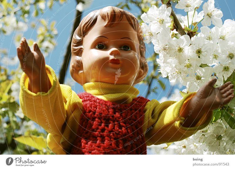 All I can do is to dream of you all day through Blüte Frühling nah Frieden Kleid Vertrauen Spielzeug Puppe Geborgenheit Intimität Kirsche Umarmen Pollen drücken