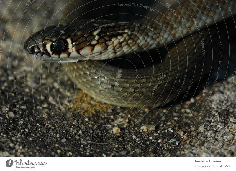 schau mir in die Augen Gift dunkel Schlange Haut Scheune Natur Detailaufnahme