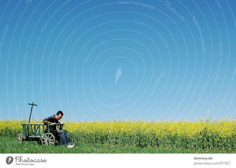 streitwagen Himmel Mann grün blau Sommer Freude Auge Wiese Garten Gras Haare & Frisuren lachen Frühling Wärme Park lustig