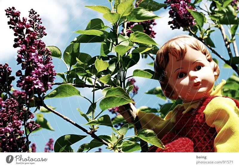 Wenn der flieder Flieder wieder blüht, Frühling Blüte Kleid Kunststoff violett Spielzeug Vertrauen Duft Geruch Puppe Pollen winken Frühlingsgefühle Staubfäden