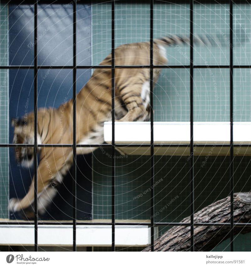 pixeltiger III Tiger Zoo Tier schlafen Käfig Gitter Trauer gefangen Pfote Umweltschutz Lebewesen Show Landraubtier Raubkatze maskulin Fell gefährlich bissig