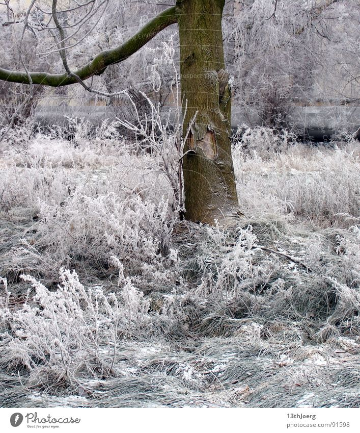 Frostschatten Leipzig Winter Baum Wiese Park stilllegen Baumrinde weiß kalt frieren Eis Garten Bahnhof Schnee Natur Reudnitz